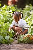 Child picking vegetables in garden
