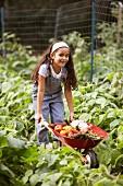 Girl with wheelbarrow of vegetables