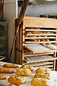 Assorted loaves in a bakery