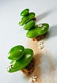 Pistachio galets
