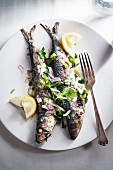 Grilled sardines with coriander, parsley, lemon, green olives and red onions