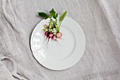 Radishes on a white porcelain plate