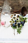 Blackberry and sloes sprigs with leaves and fruits, a glass bottle, a funnel and twine