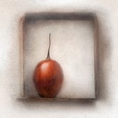 A tamarillo in a wooden frame