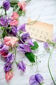 Purple and pink sweet peas with a label