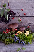 An autumnal arrangement of moss, mushrooms, blueberries, rosehips and elderberries on a wooden surface