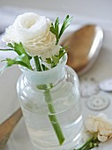 White ranunculus in glass vase decorating table