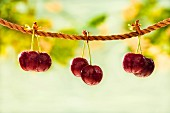 Three pairs of cherries hanging on a rope in the garden