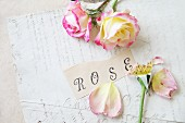 Roses and rose petals on an old document