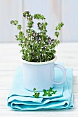 Fresh, flowering thyme in an enamel mug