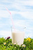 A glass of milk in a flowering meadow