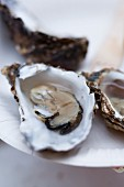 Fresh oysters (close-up)