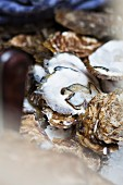 Leftover oyster shells (close-up)