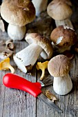 Porcini mushrooms, chanterelle mushrooms and a mushroom knife