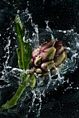 And artichoke falling into water