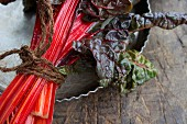 A bundle of red chard (detail)