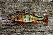 English perch on a wooden board