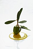 A green olive with a sprig in olive oil