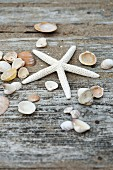 Starfish and seashells on wooden surface