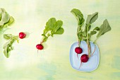 Radishes on a plate and on a green surface