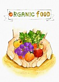 An illustration of organic food - hands holding fruit and vegetables (illustration)