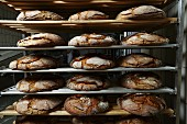 Loaves of bread in a bakery