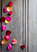 Rose petals on grey wooden surface