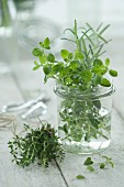 Oregano and rosemary in a glass of water with fresh thyme in the foreground