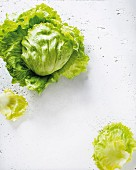 Fresh iceberg lettuce, whole and individual leaves