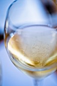 A glass of sparkling wine from Franciacorta, Italy (close-up)