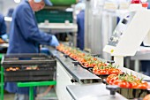 A worker packaging tomatoes on a production line in a factory
