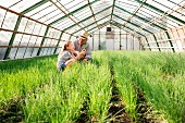 A grandfather and granddaughter cutting chives in a greenhouse