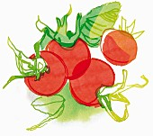 Rosehips (illustration)