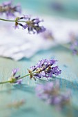 Lavender flowers on a blue surface