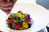 Plating up a colourful edible flower salad