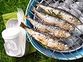 Grilled rosemary sardines