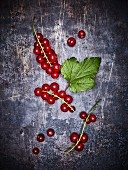 Redcurrants on a grey background (seen from above)