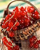 Korb mit roten Johannisbeeren