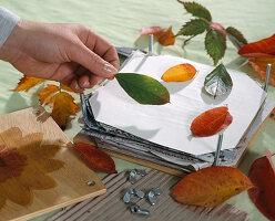 Blätter Pressen blüten und blätter pressen windlichter mit getrockneten gepressten