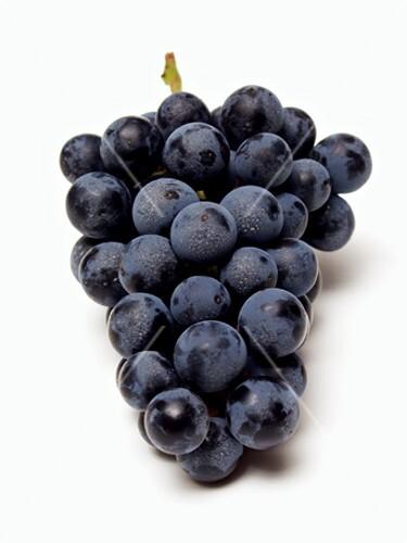 Bilder Blaue Weintrauben ~ Blaue Trauben, Sorte Concord – StockFood