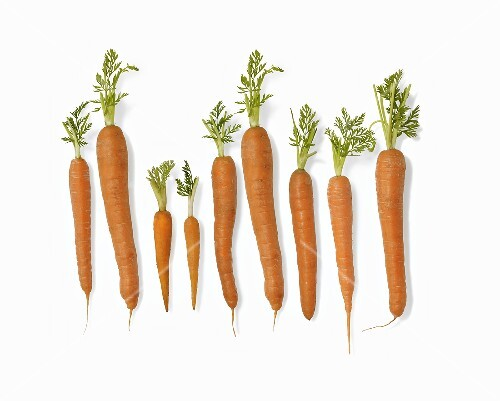 Fresh carrots (diagram)