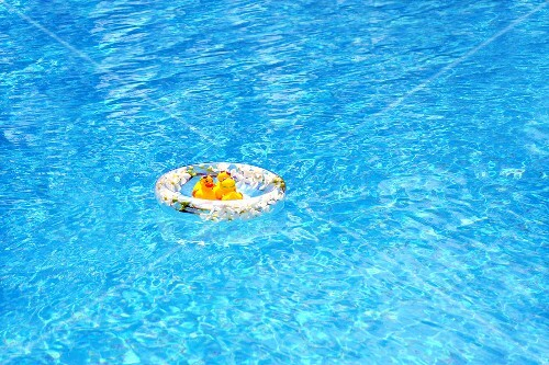 A rubber duck in a rubber ring in a swimming pool