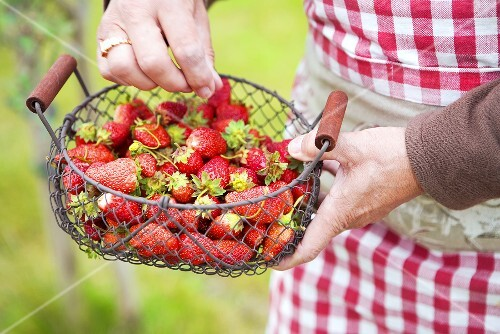 Fresh strawberries in a wire basket