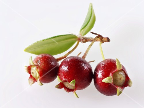 Chilean guava berries on twig