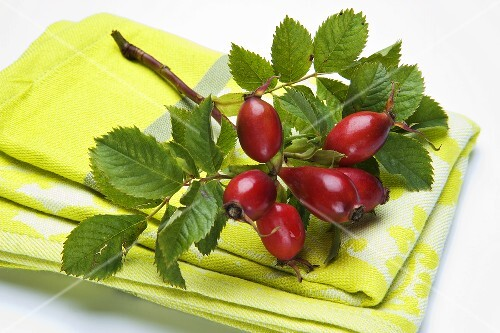 A sprig on rosehips on a dish cloth