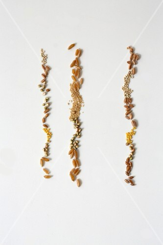 Various types of seed in rows next to each other