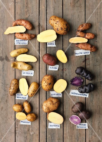 Various types of potatoes with labels (seen from above)