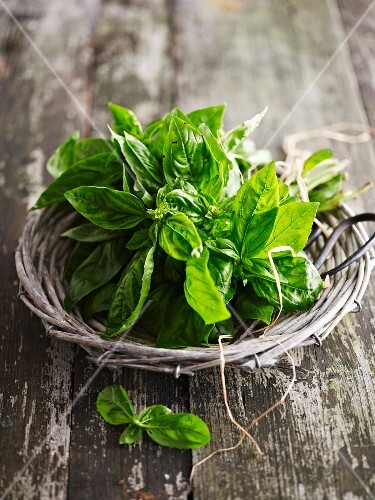 Fresh basil in a wicker basket
