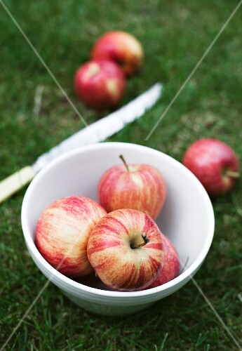Red Gala apples in a bowl in a field