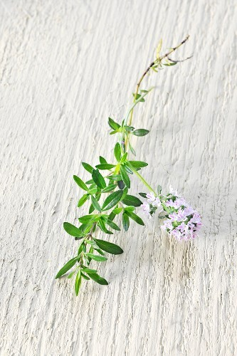 Thyme with flowers